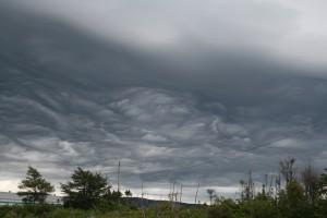 Mammary cumulus ?