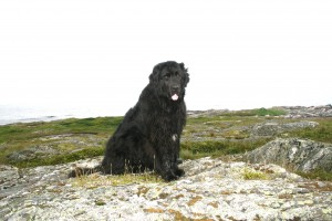 Effie in Newfoundland